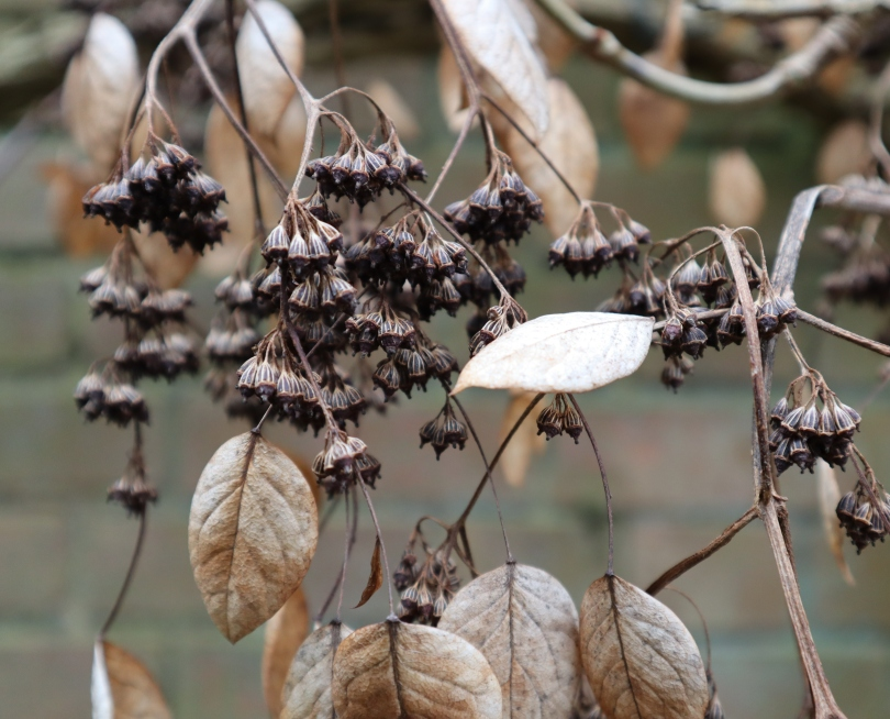 Winter seeds and leaves